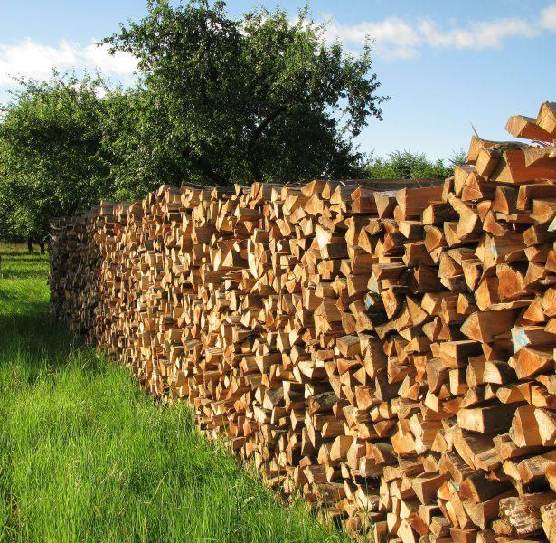 tree-wood-140567_1920